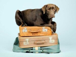 perro sobre maletas